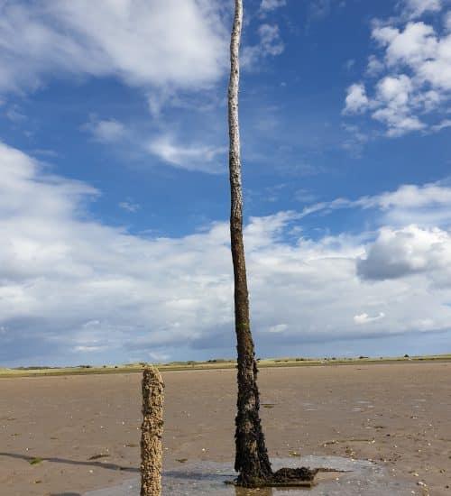 Pole on the Pilgrim's Way, Holy ISland