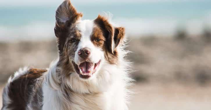 Dog on the beach re Dog-friendly accommodation on Holy Island